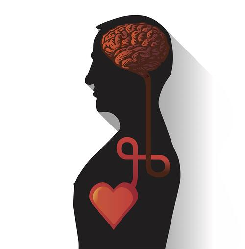 Connection between brain and heart