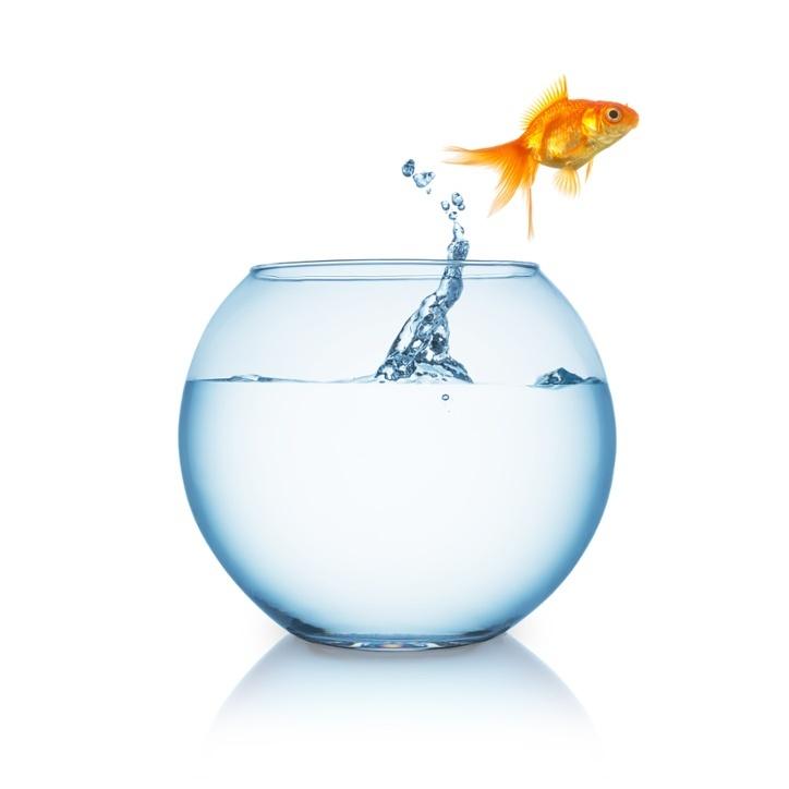 Goldfish-1.jpg
