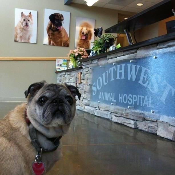 southwest-animal-hospital